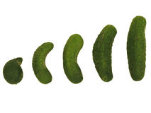 Cucumbers` evolution. Evolution of group of cucumbers Stock Photography