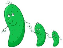 Cucumbers, family Stock Photography