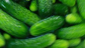 Cucumbers In Farm Washing Machine Stock Photos