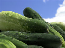 Cucumbers at Farmers Market. Piled high, fresh cukes stock image