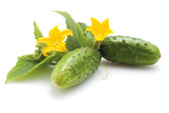 Cucumbers with flowers Royalty Free Stock Photography