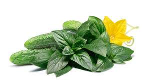 Cucumbers with fresh basil, paths Royalty Free Stock Photography