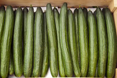 Cucumbers. Fresh cucumbers in a box stock photos