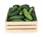 Cucumbers. Fresh ripe cucumbers in wooden box isolated on white background Royalty Free Stock Photo