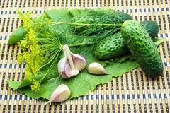 Cucumbers, garlic, dill and horseradish on a napkin. Cucumbers, garlic, dill and horseradish on a bamboo napkin royalty free stock images