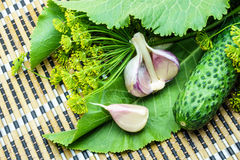 Cucumbers, garlic, dill and horseradish on a napkin. Cucumbers, garlic, dill and horseradish on a bamboo napkin stock images