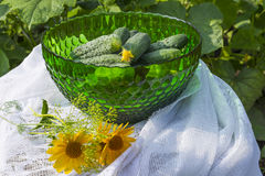 Cucumbers in a glass green vase or bowl on the background of lac Stock Photo