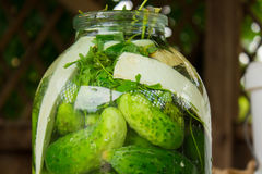 Cucumbers in glass jar Royalty Free Stock Photography