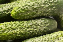 Cucumbers, green, cucumber background. Green prickly cucumber from the garden, texture, background cucumber Royalty Free Stock Image