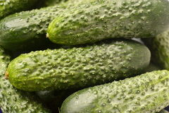 Cucumbers, green, cucumber background. Green prickly cucumber from the garden, texture, background cucumber Royalty Free Stock Photography