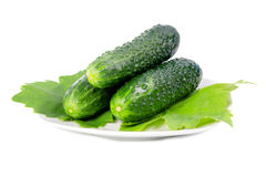 Cucumbers with green leaves on a plat Royalty Free Stock Photo