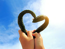 Cucumbers in Heart Shape Royalty Free Stock Photo