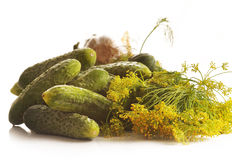 Cucumbers with herbs and spices Stock Image