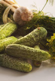 Cucumbers with herbs and spices Royalty Free Stock Images