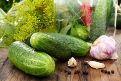Cucumbers, herbs and spices for pickling. Royalty Free Stock Photo