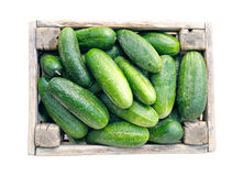 Cucumbers In Box Royalty Free Stock Images