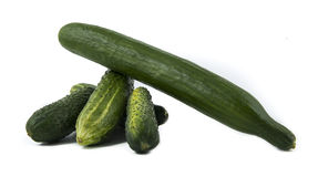 Cucumbers isolated over white. Background Stock Photography