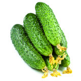 Cucumbers isolated over white background close up macro Stock Images