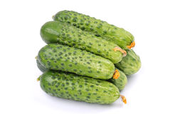 Cucumbers isolated on white. Fresh green cucumbers isolated on white Stock Photography