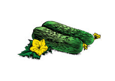 Cucumbers with leaf and flower Stock Image