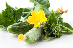 Cucumbers with leaves and flower. Isolated on white background Royalty Free Stock Photography
