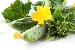 Cucumbers with leaves and flower. On white background Royalty Free Stock Image