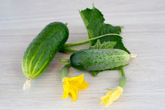 Cucumbers, leaves and flowers Stock Image