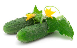 Cucumbers with the leaves on white Royalty Free Stock Images