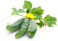 Cucumbers with leaves. On white background Royalty Free Stock Photos