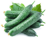 Cucumbers with leaves. Royalty Free Stock Photo