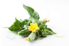 Cucumbers with leaves on white background. Cucumbers with leaves isolated on white background Stock Photo