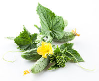 Cucumbers with leaves on white background. Cucumbers with leaves isolated on white background Stock Image