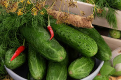 Cucumbers for marinate with dill. Close up Stock Photo