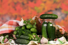 Cucumbers for marinate with dill. And garlic Royalty Free Stock Photography