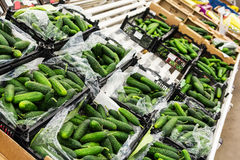 Cucumbers at market. Fresh ripe green cucumbers in box at market Royalty Free Stock Image