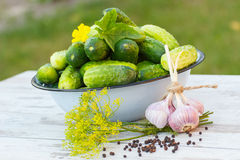 Cucumbers in metal bowl and spices for pickling cucumbers in garden on sunny day Royalty Free Stock Photography