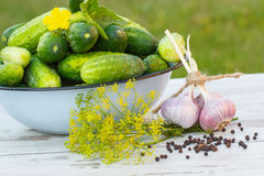 Cucumbers in metal bowl and spices for pickling cucumbers in garden on sunny day Royalty Free Stock Photos
