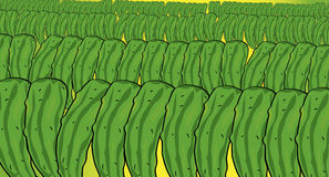 Cucumbers pattern Royalty Free Stock Image
