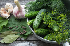 Cucumbers for pickling Stock Photography