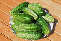 Cucumbers on the plate. Some cucumbers on the plate Stock Photo