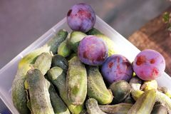 Cucumbers and plums in a plastic box. Fruits and vegetables royalty free stock image