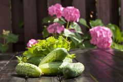 Cucumbers. Preparation of inventories for the winter Royalty Free Stock Images