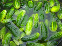 Cucumbers prepare for preservation Stock Photos