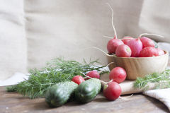 Cucumbers, radishes and herbs. Fresh spring vegetables royalty free stock photo