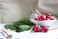 Cucumbers, radishes and herbs. Fresh spring vegetables royalty free stock images