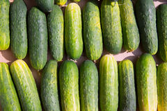 Cucumbers in a row at the market place Royalty Free Stock Photography