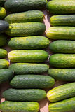 Cucumbers in a row at the market place Stock Images