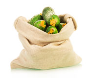 Cucumbers in sack Stock Images