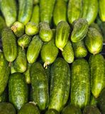 Cucumbers for sale on market place Royalty Free Stock Image