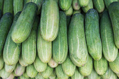 Cucumbers for sale at market Stock Photography